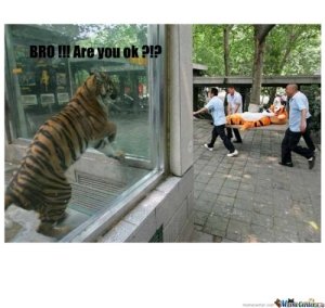 Tiger-compassion_c_124879